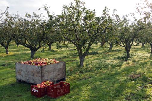 thumbnail for UVM Catamount Educational Farm Apple and Vegetable Sale!