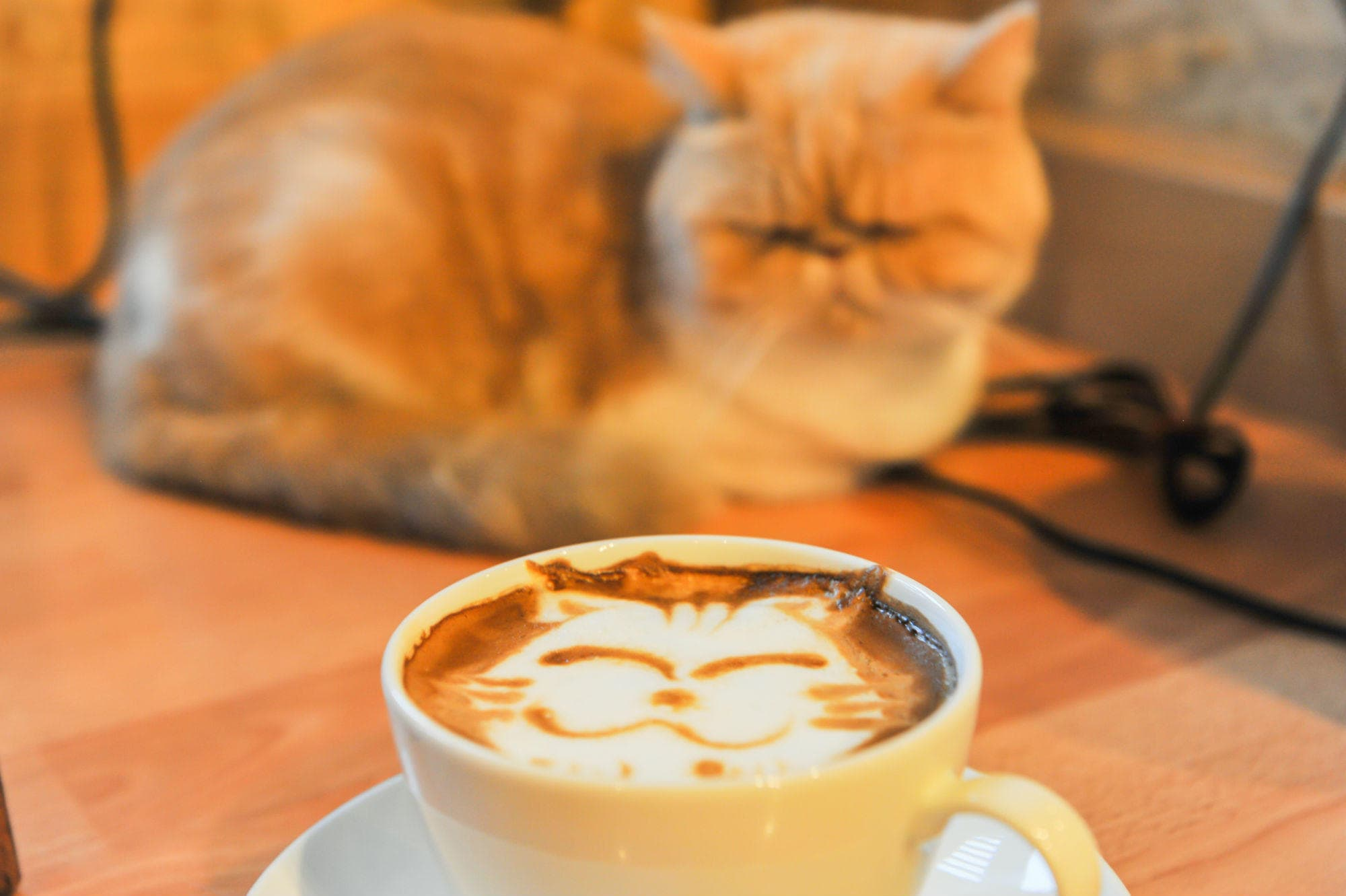 cat coffee art